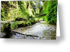 Fern Canyon, Redwood National Park Greeting Card