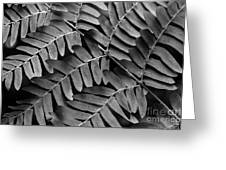 Fern Close-up Of Water Droplets Greeting Card