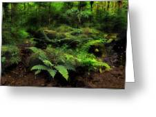 Ferns Of The Forest Greeting Card