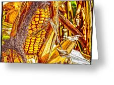 Field Corn Ready For Harvest Greeting Card