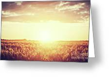 Field, Countryside At Sunset. Harvest Time. Vintage Greeting Card