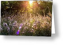 Field Faeries Greeting Card