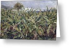 Field Of Banana Trees Greeting Card