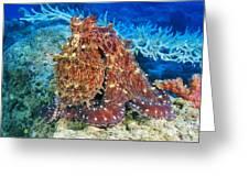 Fiji, Day Octopus Greeting Card