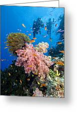 Fiji Underwater Greeting Card