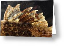 Fin Of Shorthorn Sculpin Greeting Card
