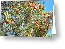 Firethorn Tree Greeting Card