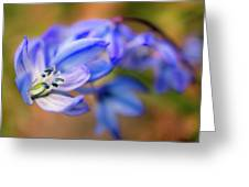 First Spring Flowers Greeting Card