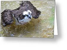 Fish Eagle Bird Playing In Water Greeting Card