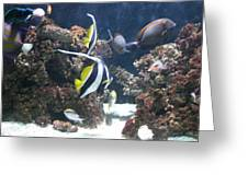Fishes Greeting Card