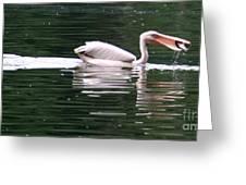 Fishing Pelican Greeting Card