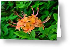 Flame Azalea Greeting Card