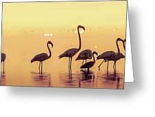 Flamingo During Sunset Greeting Card