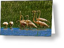 Flamingo Family Greeting Card