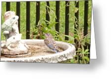 Fledgling Bluebird At Birdbath Greeting Card
