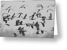 Flight Of The Sandhill Cranes Greeting Card