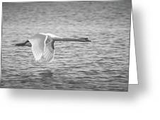 Flight Of The Swan Greeting Card