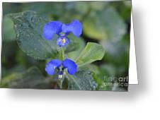Flor Silvestre Greeting Card