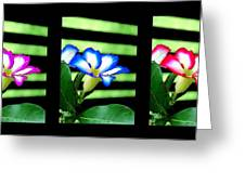 Floral Triptych Greeting Card