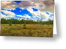 Florida Everglades Greeting Card