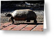 Florida Gopher Tortoise Greeting Card