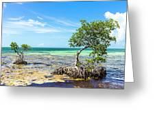 Florida Keys Mangrove Reef Greeting Card