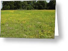 Florida - Wildflowers Greeting Card