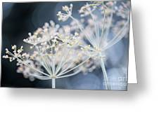 Flowering Dill Clusters Greeting Card