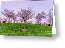 Flowering Young Cherry Trees On A Green Hill In The Park  Greeting Card