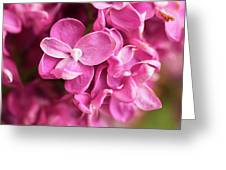Flowers - Freshly Cut Lilacs Greeting Card