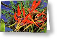 Flowers Of Paradise Greeting Card