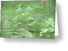 Fluffy Ferns Greeting Card