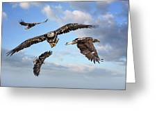 Flying Eagles Greeting Card