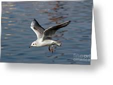 Flying Gull Greeting Card
