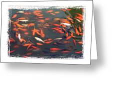 Koi Pond With Framing Greeting Card
