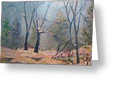 Forest At Twilight Greeting Card
