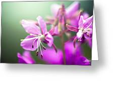 Forest Flower Greeting Card by Adnan Bhatti