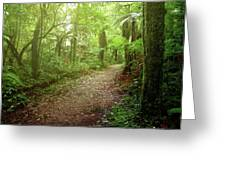 Forest Walking Trail 1 Greeting Card