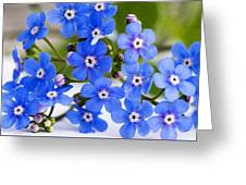 Forget-me-not Greeting Card