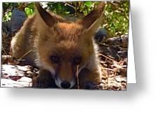 Fox Joy Greeting Card by Colette V Hera Guggenheim