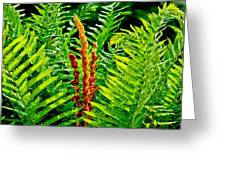 Fern Fractals In Nature Greeting Card