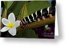 Frangipani Tree And Caterpillar Greeting Card