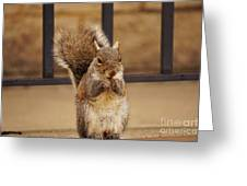 French Fry Eating Squirrel Greeting Card