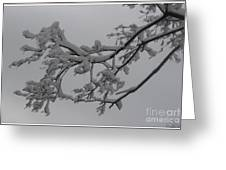 Fresh Snow On Magnolia Tree Greeting Card