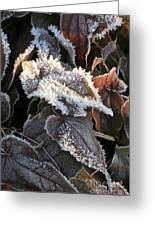 Frost-lined Greeting Card