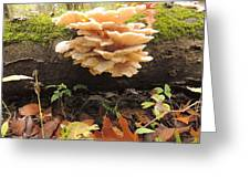 Fungus Greeting Card