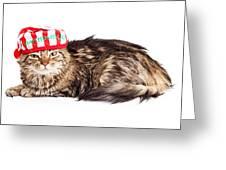 Funny Grumpy Christmas Cat Greeting Card
