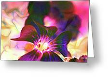 Garden Glow Greeting Card