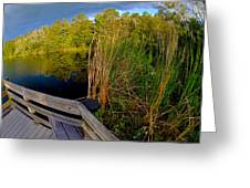 Gator Lake Greeting Card