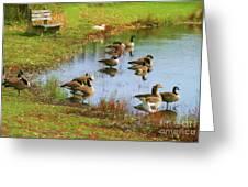 Geese Lake Fall  Greeting Card